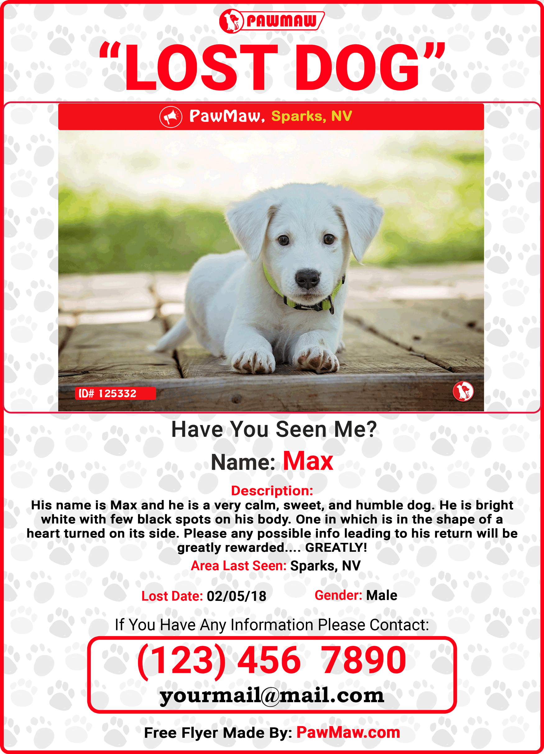 Lost Pet Flyer Template Free
