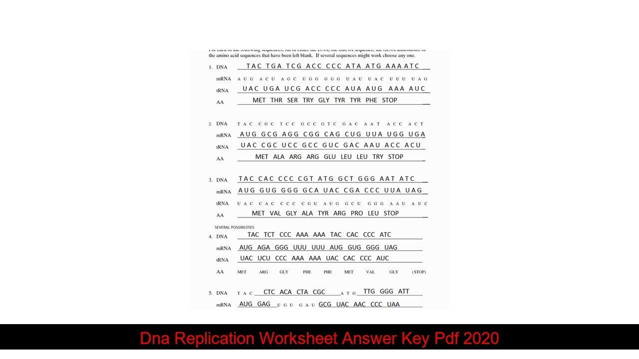 Dna Replication Worksheet Answer Key Pdf