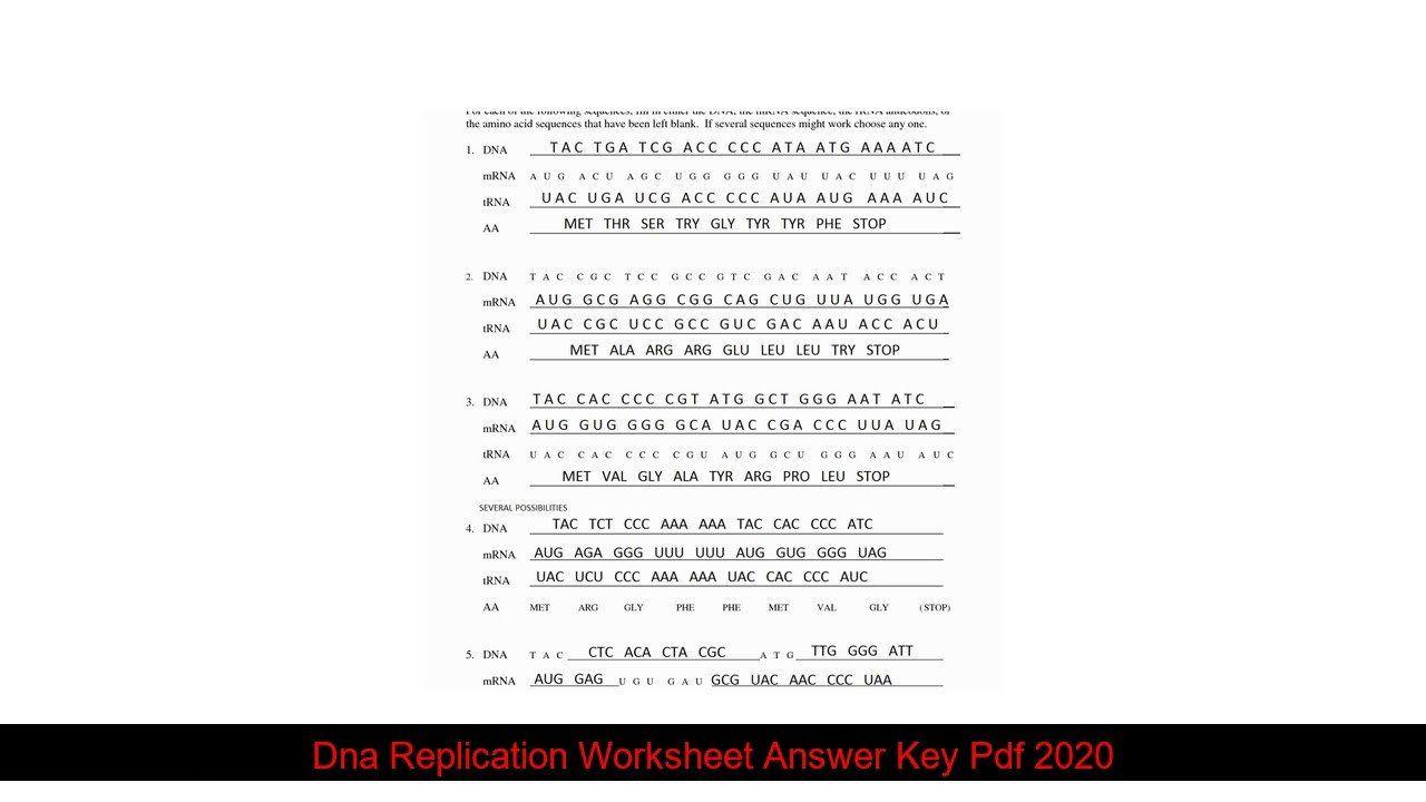 Dna Replication Worksheet Answer Key Pdf