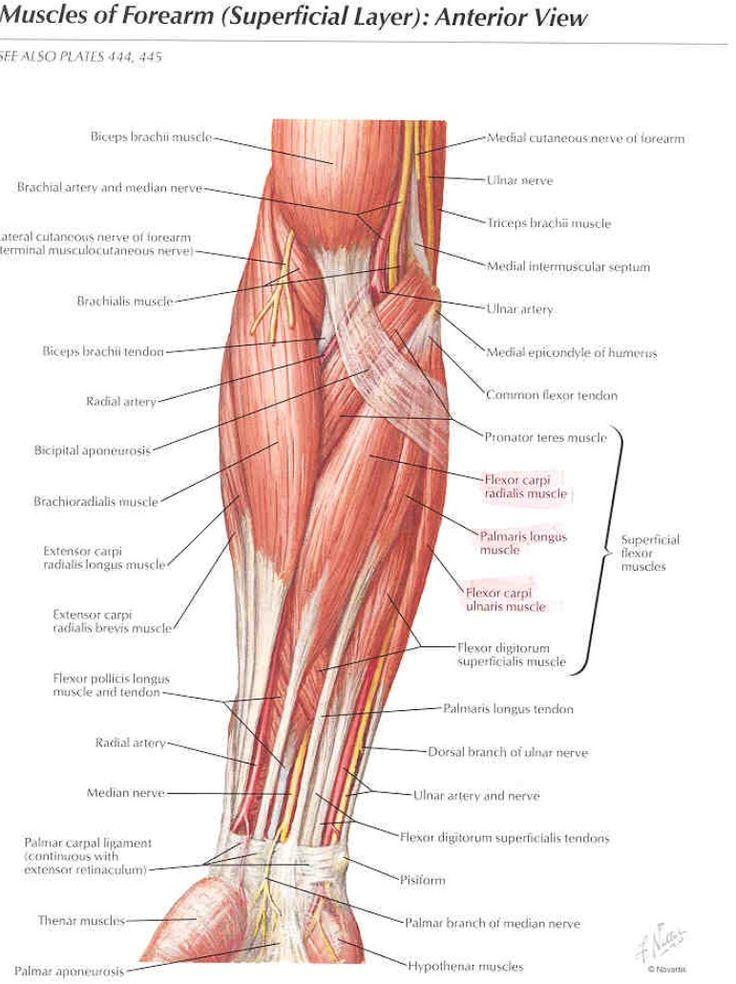 Grays Anatomy Pdf Latest Edition