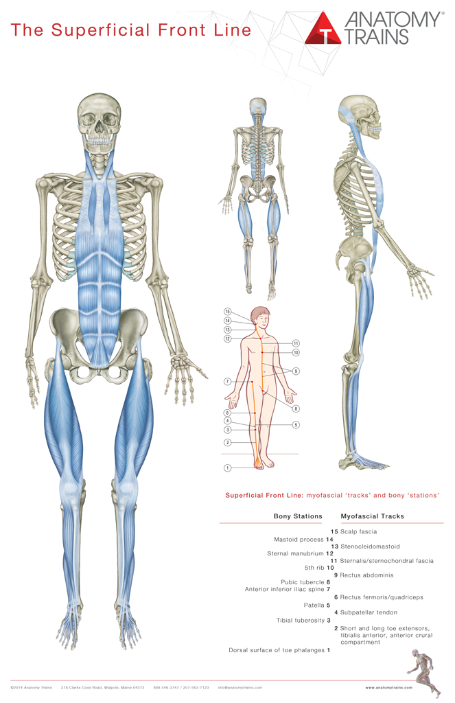 Anatomy Trains Pdf Free Download