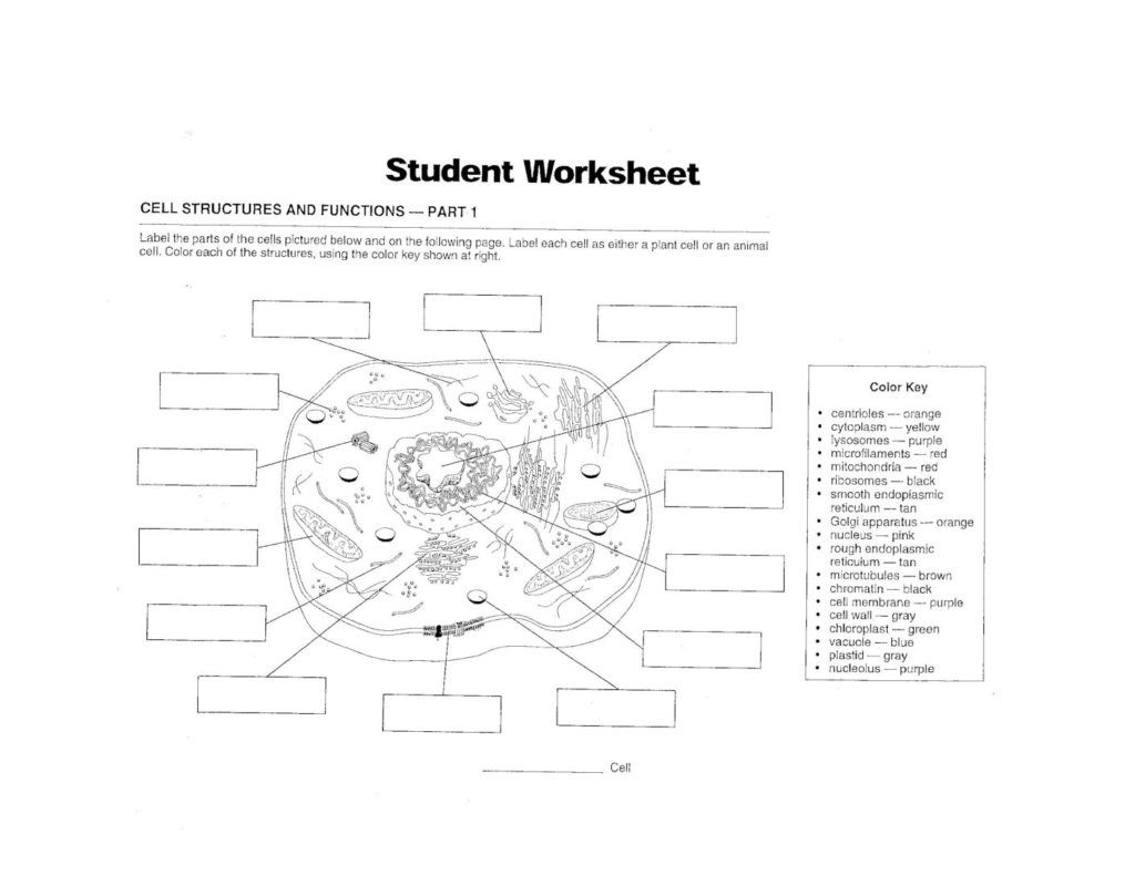Cell Structure And Function Worksheet Answers Pdf