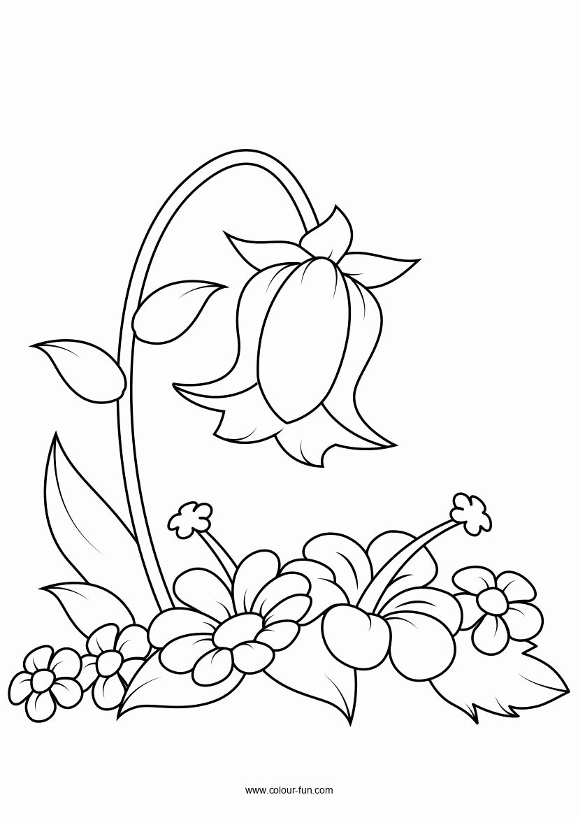 Free Flower Coloring Pages Pdf