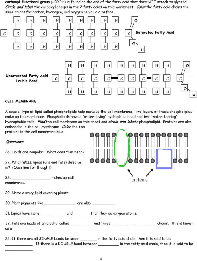 Macromolecules Worksheet Pdf Answers