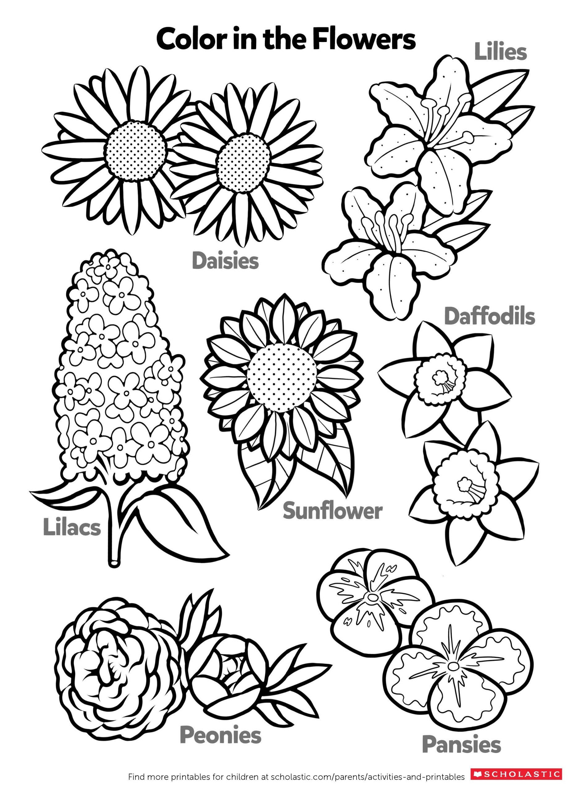 Printable Flower Coloring Pages Pdf