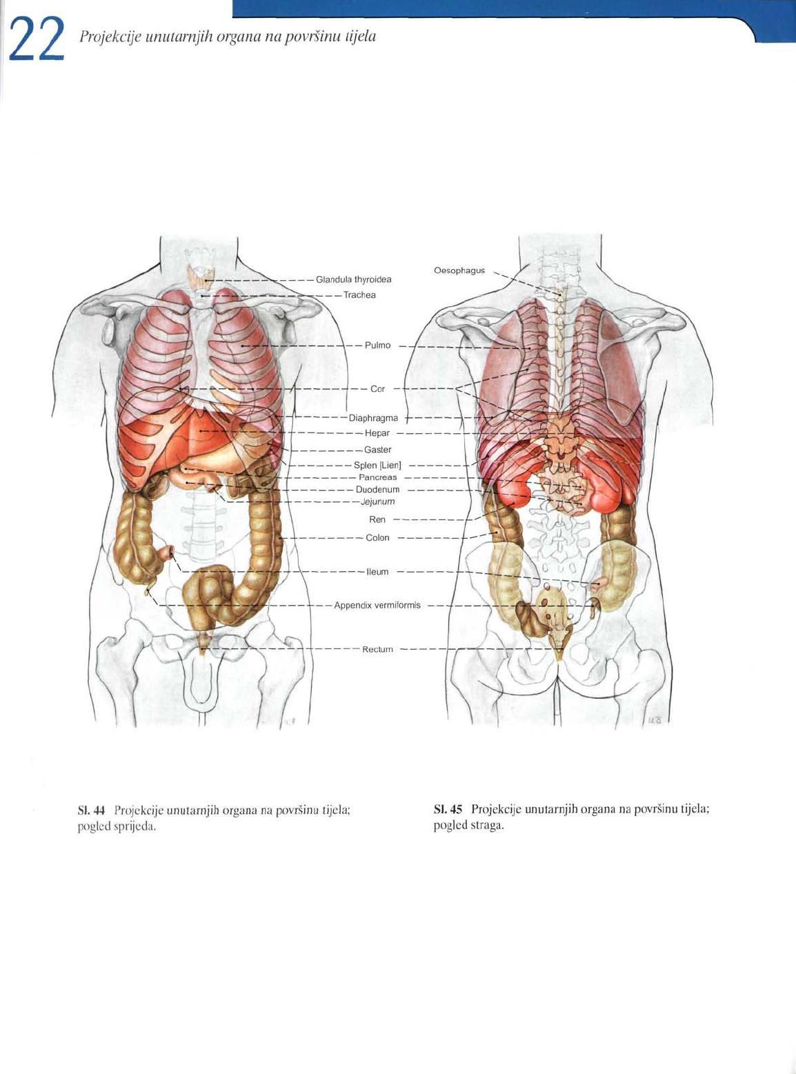 Sobotta Atlas Of Human Anatomy Pdf Free Download