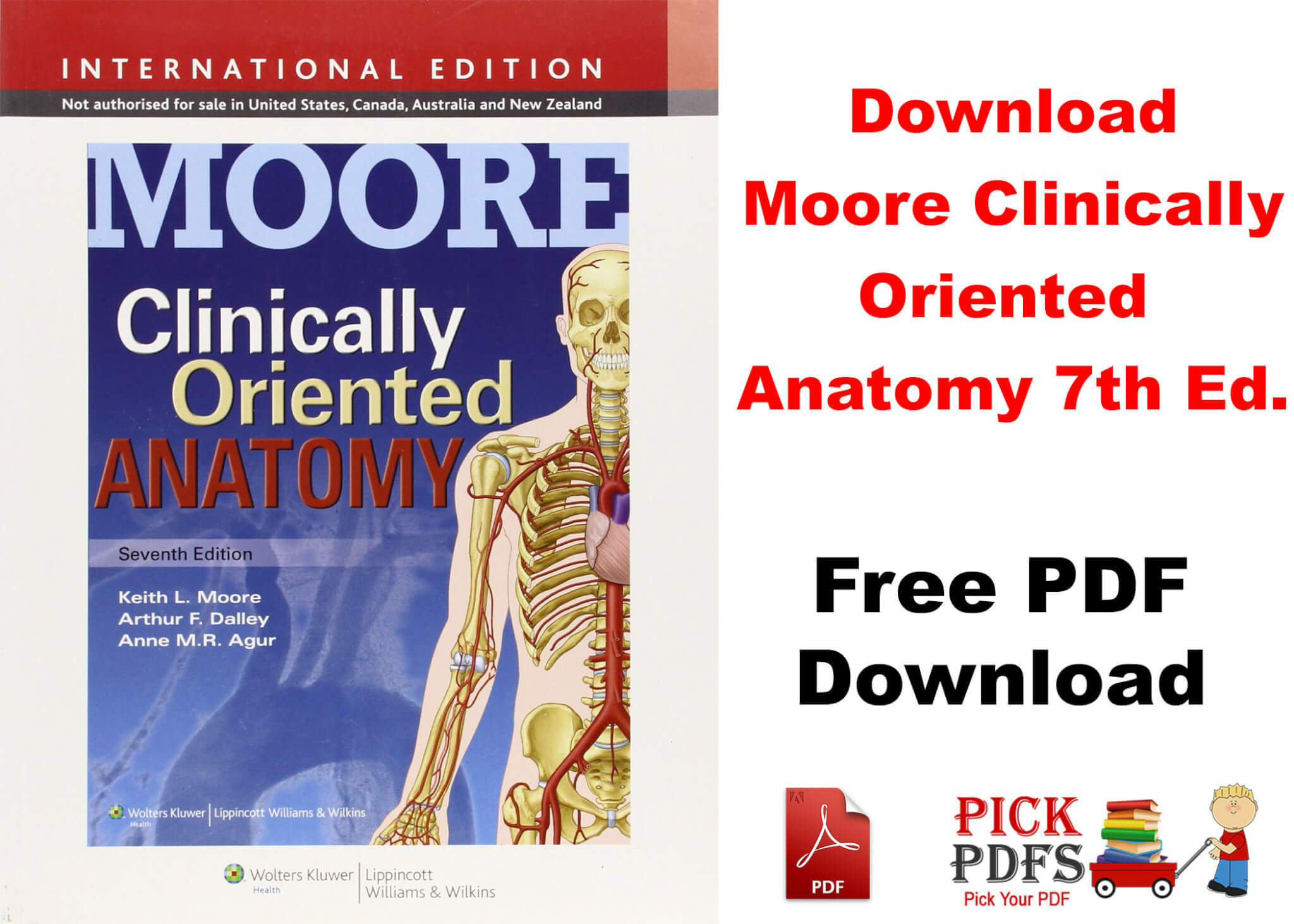 Moores Clinical Anatomy Pdf