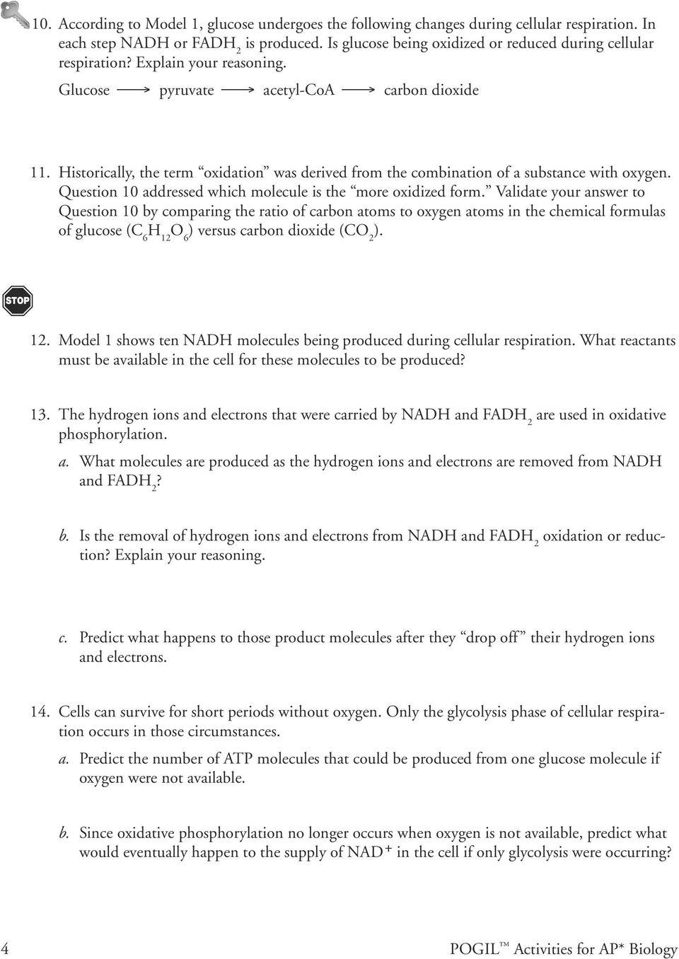 Oxidative Phosphorylation Pdf Answer Key