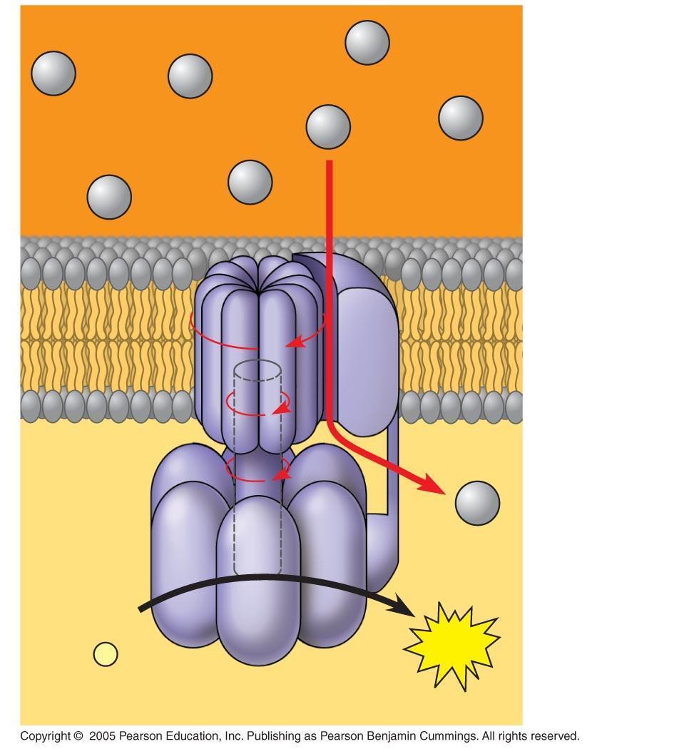 Oxidative Phosphorylation Pdf Download